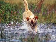 Dogs / Animals