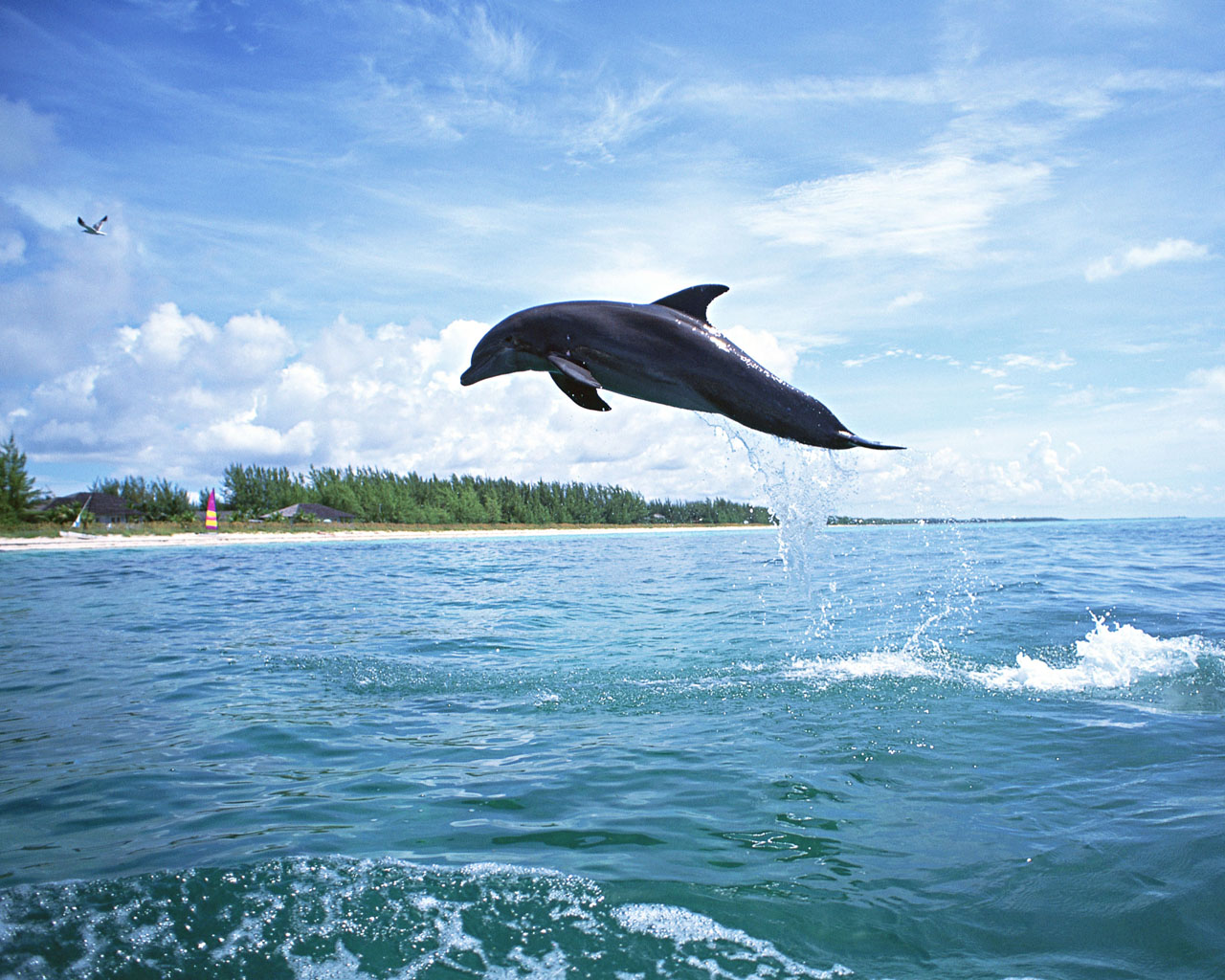 Download HQ Dolphins wallpaper / Animals / 1280x1024