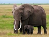 Elephants / Animals
