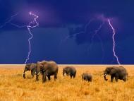 Download Elephants / Animals