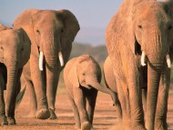 Elephants / Animals