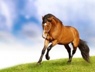 sports / Horses