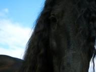 Download Horses / Animals