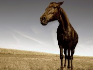 Download Horses / Animals