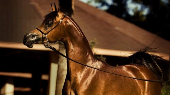 Free Send to Mobile Phone Horses Animals wallpaper num.114