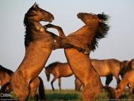 play / Horses