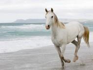 sea / Horses