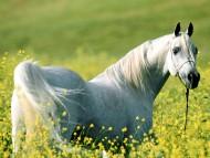 Horses / HQ Animals