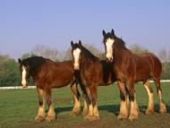 three / Horses