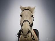 muzzle / Horses