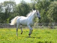 gallop / Horses