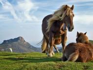 Horses / Animals