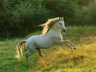 jumping / Horses