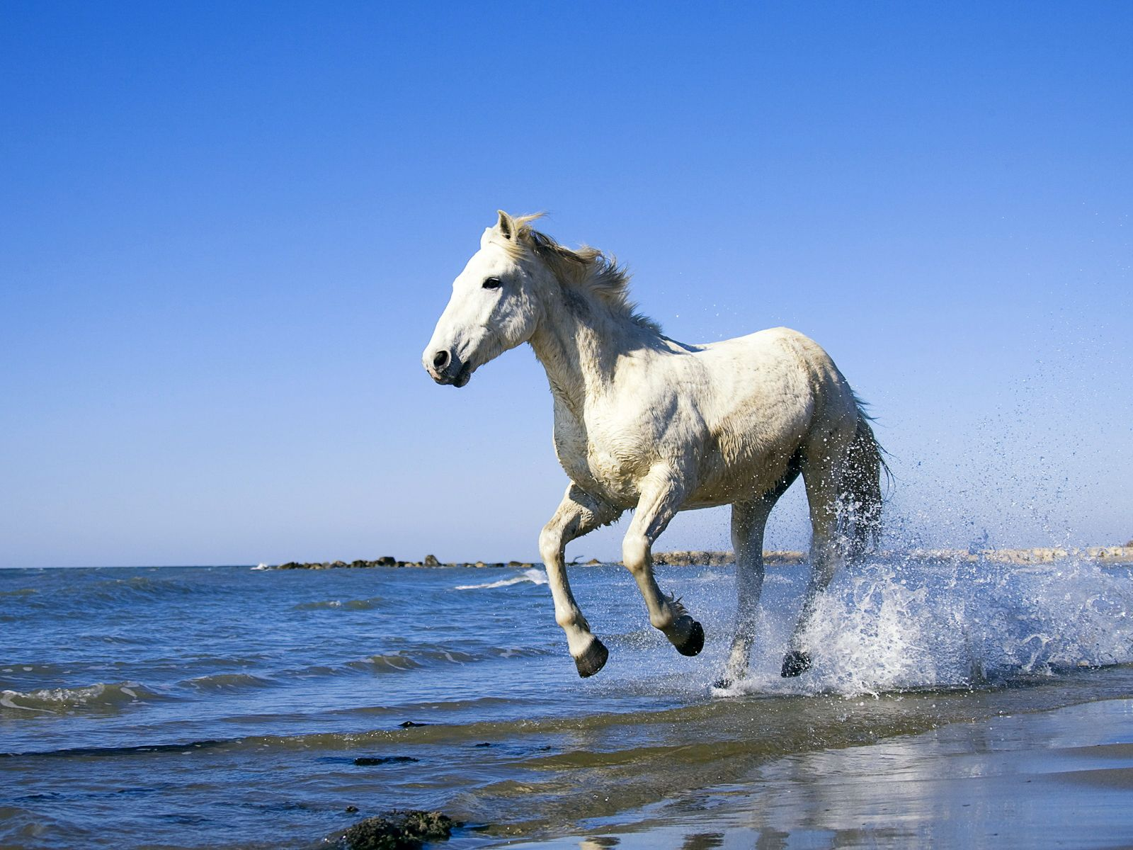 white horse wallpaper high resolution