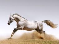 Download rides / Horses