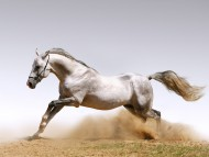rides / Horses