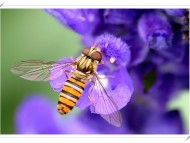 Insects / Animals