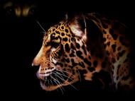 Muzzle / Jaguars