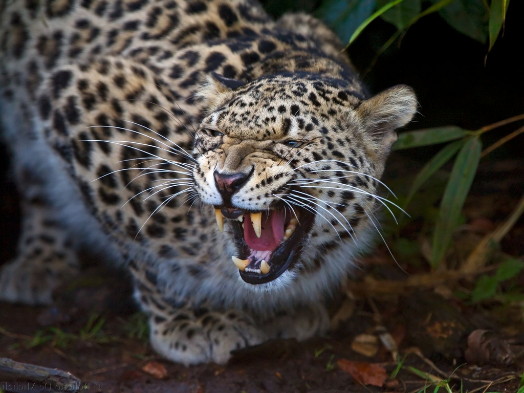 jaguars_fad3d1aa.jpg