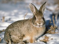 Download High quality Rabbits  / Animals