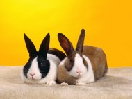 Rabbits / Animals