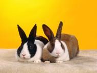 Rabbits / Animals