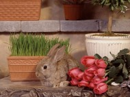 Download Rabbits / High quality Animals