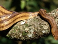Reptiles / Reptiles