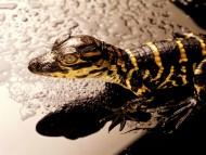 Reptiles / Animals