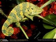 Download Reptiles / Animals