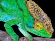 Reptiles / Animals