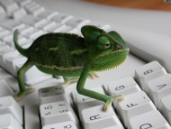 On keyboard / Reptiles