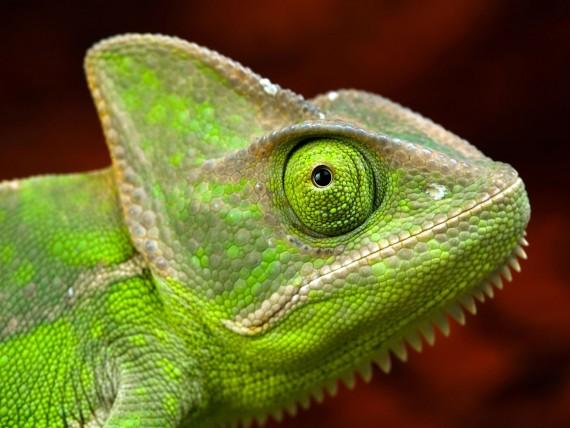 Free Send to Mobile Phone Reptiles Animals wallpaper num.86