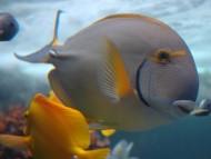 High quality Underwater  / Animals