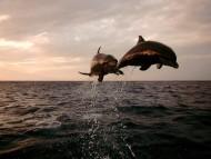 Underwater / Animals
