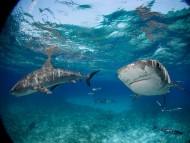 Sharks / Underwater