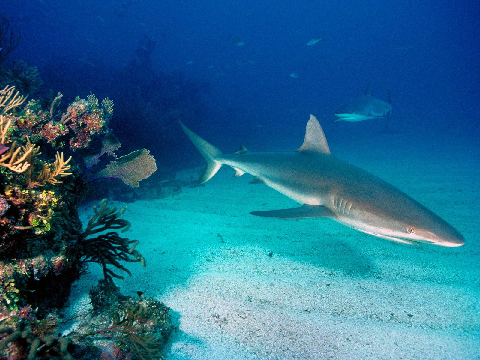 http://www.shareyourwallpaper.com/upload/wallpaper/animals/underwater/underwater_33f892bb.jpg