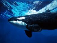 Download Underwater / Animals