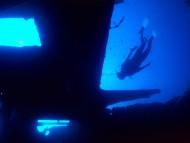 HQ Underwater  / Animals