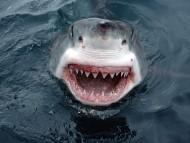 Underwater / High quality Animals