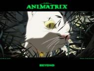 Animatrix / Anime