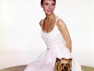 Audrey Hepburn / Celebrities Female