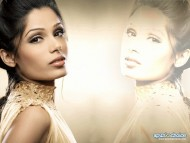 Download Freida Pinto / Celebrities Female