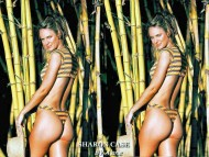 Sharon Case / Celebrities Female