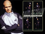 David Beckham / Celebrities Male