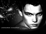 Leonardo Dicaprio / Celebrities Male