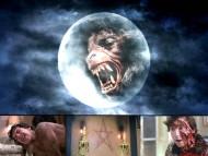 American Werewolf / Movies