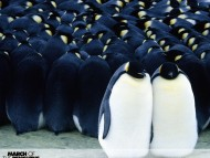 March Of The Penguins / Movies