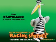 Racing Stripes / Movies