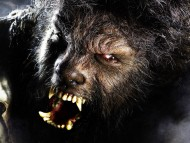 The Wolf Man / Movies